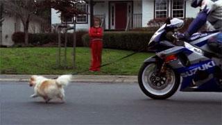 Portfolio-Suzuki-Dog